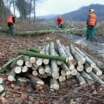 GaLaBau Baumfällarbeiten