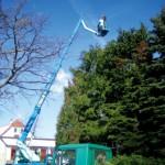 GaLaBau Baumpflegearbeiten